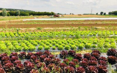 Plus que jamais, mangeons local et soutenons les producteurs !